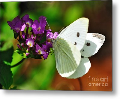 Dainty Butterfly Metal Print by Kaye Menner