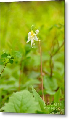Dainty Lovely Metal Print by Birches Photography