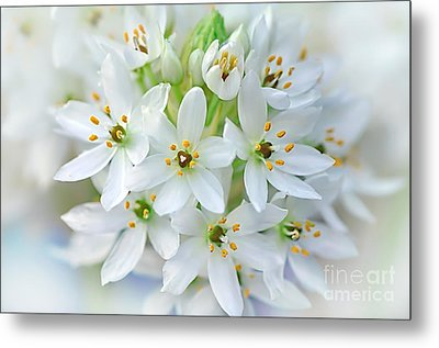 Dainty Spring Blossoms Metal Print by Kaye Menner