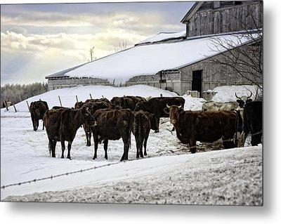 Dairy Farm Metal Print by Lisa Bryant