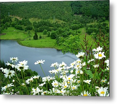 White Daisies At Queens View Metal Print