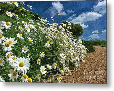 Metal Print featuring the photograph Daisies By The Path - Photo Art by Les Bell