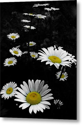 Daisies Metal Print by GJ Blackman