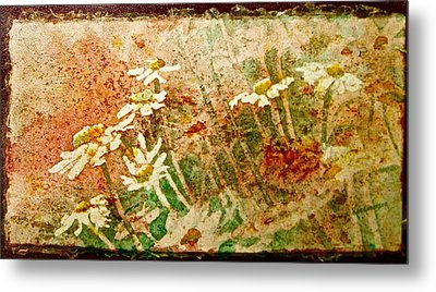 Daisies In The Wind Metal Print by Carolyn Rosenberger