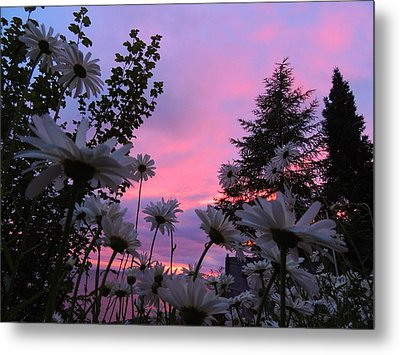 Daisies Kissing Dusk Metal Print