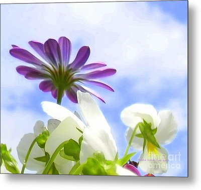 Daisies Looking Up Metal Print by Angelia Hodges Clay