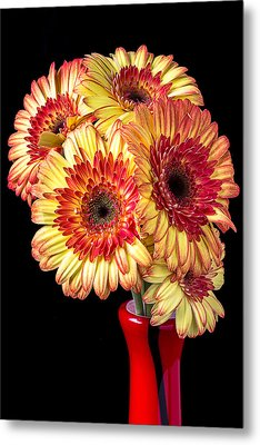 Daisy Bouquet Metal Print by Garry Gay