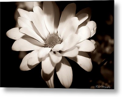 Metal Print featuring the photograph Daisy by Debra Forand