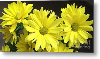 Daisy Family Metal Print
