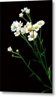 Daisy Flower Bouquet  Metal Print
