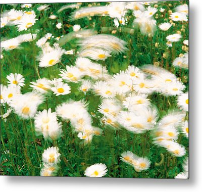 Daisy Flowers With Blur Motion Metal Print by Panoramic Images
