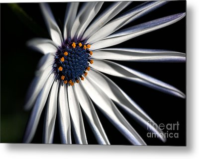 Metal Print featuring the photograph Daisy Heart by Joy Watson