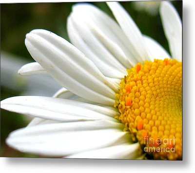 Metal Print featuring the photograph Daisy by Patti Whitten