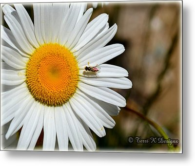 Daisy Metal Print by Terri K Designs
