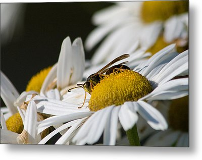Metal Print featuring the photograph Daisy With Friend by Greg Graham