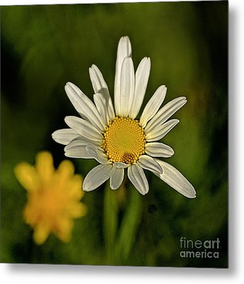 Daisynette - 726-v3a Metal Print by Variance Collections