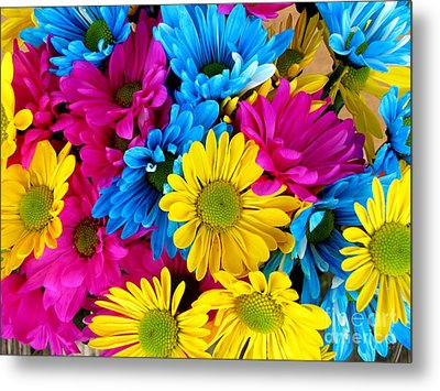 Metal Print featuring the photograph Daisys Flowers Bloom Colorful Petals Nature by Paul Fearn