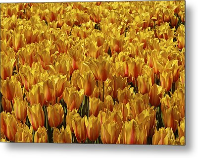 Metal Print featuring the photograph Dallas Blooms by John Babis