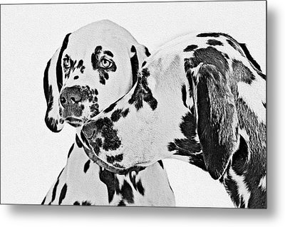 Dalmatians - A Great Breed For The Right Family Metal Print by Christine Till
