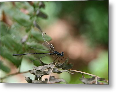 Metal Print featuring the photograph Damselfly by Neal Eslinger