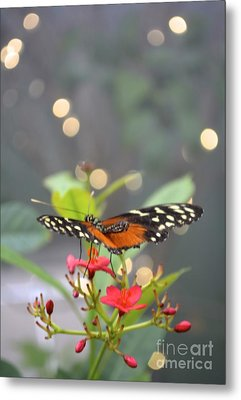 Metal Print featuring the photograph Dance Of The Butterfly by Carla Carson