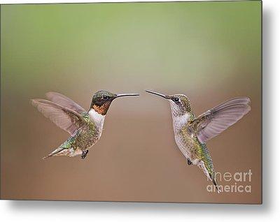Dance Of The Hummingbirds Metal Print