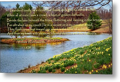 Dances With The Daffodils Metal Print by Bill Wakeley
