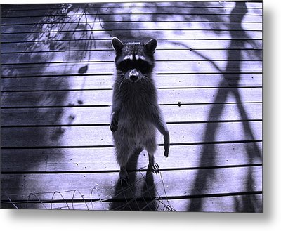 Dancing In The Moonlight Metal Print by Kym Backland