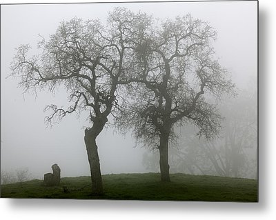 Metal Print featuring the photograph Dancing Oaks In Fog - Central California by Ram Vasudev