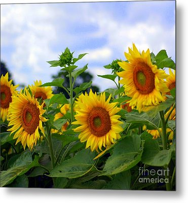 Dancing Sunflowers Metal Print by Kathleen Struckle