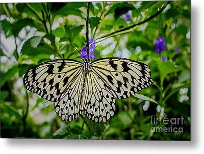 Dancing With Butterflies Metal Print by Jon Burch Photography