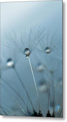 Dandelion - Standing Tall Metal Print by Rebecca Cozart