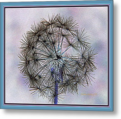 Metal Print featuring the photograph Dandelion Blue And Purple by Kathy Barney