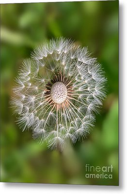 Metal Print featuring the photograph Dandelion by Carsten Reisinger