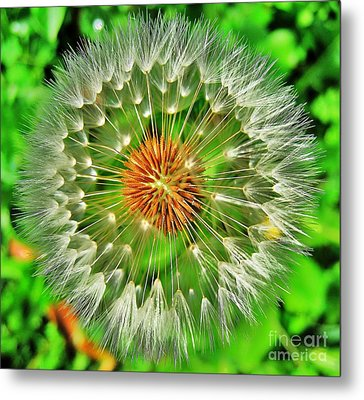 Metal Print featuring the photograph Dandelion Circle by John King
