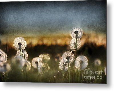 Dandelion Dusk Metal Print by Cindy Singleton