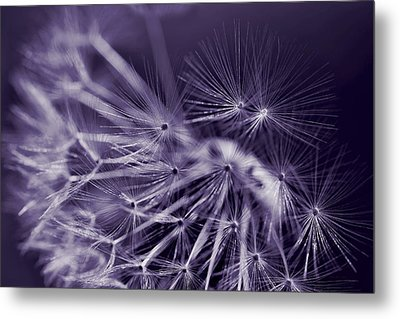 Dandelion Fly Away Dark Purple Metal Print by Jennie Marie Schell