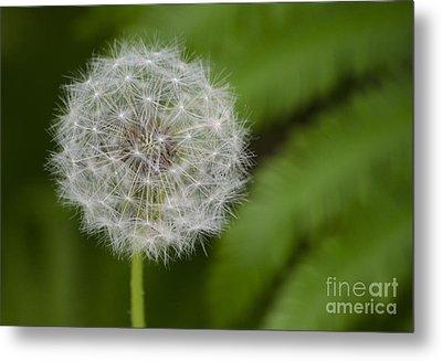 Dandelion Metal Print by JRP Photography
