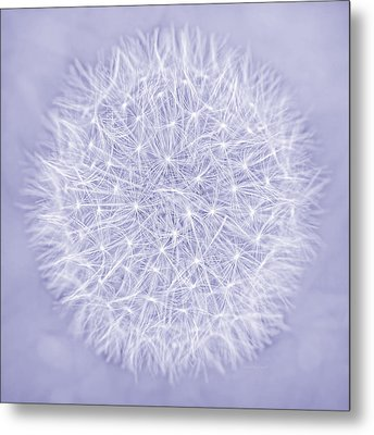 Dandelion Marco Abstract Lavender Metal Print by Jennie Marie Schell