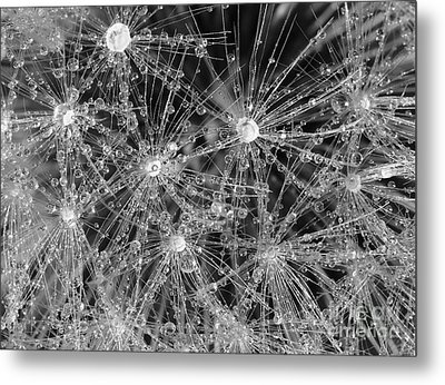 Dandelion Metal Print by Nicholas Burningham