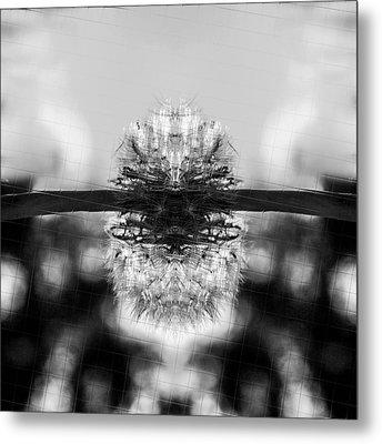 Dandelion Reflection Metal Print