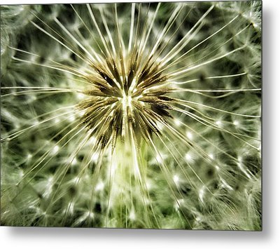 Dandelion Seeds Metal Print by Marianna Mills