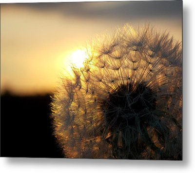 Dandelion Sunset Metal Print