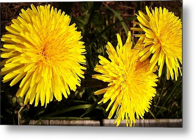 Metal Print featuring the photograph Dandelion Weeds? by Martin Howard