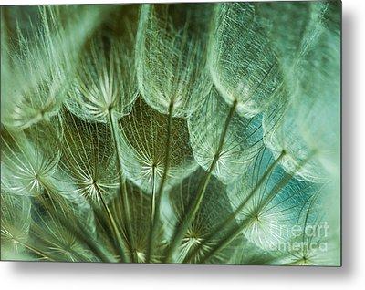 Dandelions 06 Metal Print by Iris Greenwell