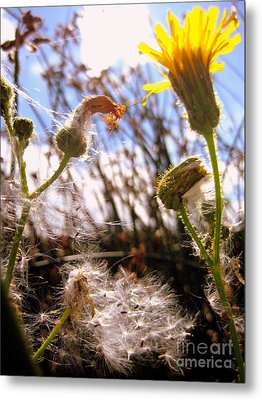Metal Print featuring the photograph Dandy Day by Kathy Bassett