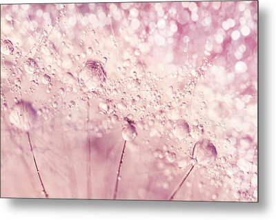 Dandy In Sparkling Pink Metal Print by Sharon Johnstone