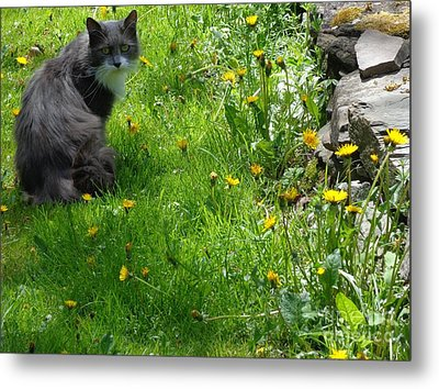 Dandy Lion Cat Metal Print by Christina Verdgeline