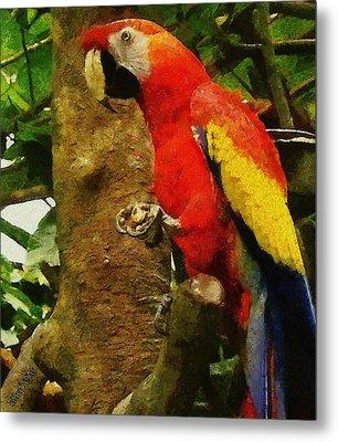 Danse Macaw Metal Print