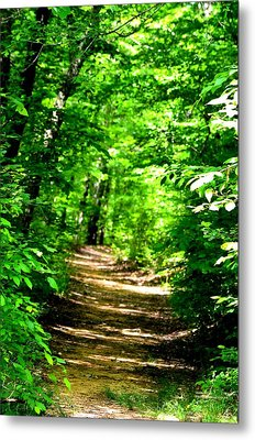 Dappled Sunlit Path In The Forest Metal Print by Maria Urso